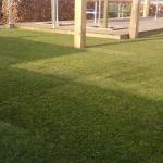 Stoere tuin met pergola en dakplatanen